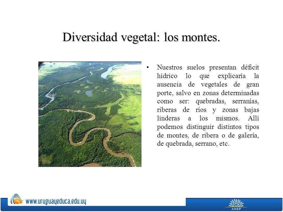 Diversidad vegetal: los montes.