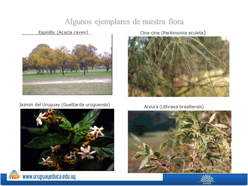 Algunos ejemplares de nuestra flora