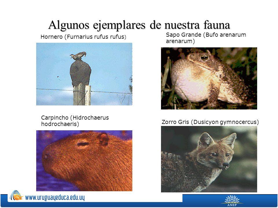 Algunos ejemplares de nuestra fauna