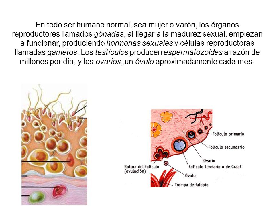 En todo ser humano normal, sea mujer o varón, los órganos reproductores llamados gónadas, al llegar a la madurez sexual, empiezan a funcionar, produciendo hormonas sexuales y células reproductoras llamadas gametos.