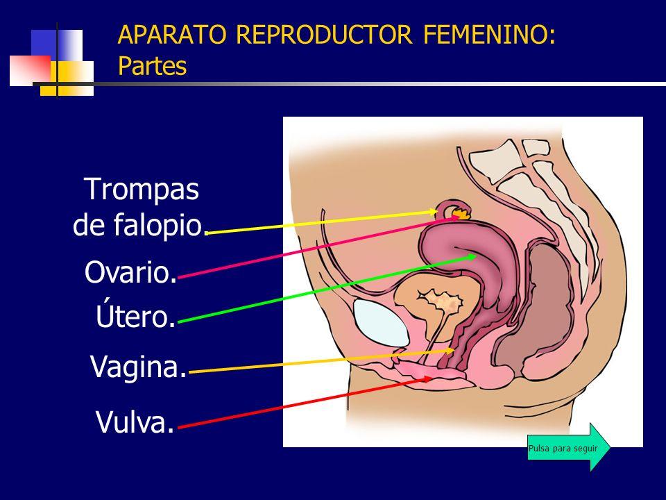 APARATO REPRODUCTOR FEMENINO: Partes