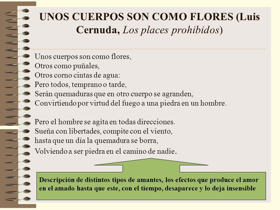 UNOS CUERPOS SON COMO FLORES (Luis Cernuda, Los places prohibidos)
