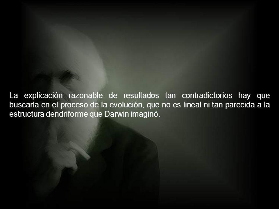 La explicación razonable de resultados tan contradictorios hay que buscarla en el proceso de la evolución, que no es lineal ni tan parecida a la estructura dendriforme que Darwin imaginó.