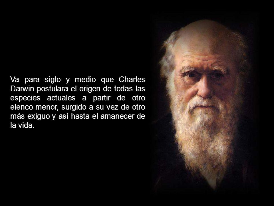 Va para siglo y medio que Charles Darwin postulara el origen de todas las especies actuales a partir de otro elenco menor, surgido a su vez de otro más exiguo y así hasta el amanecer de la vida.