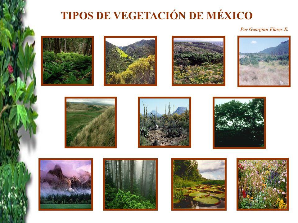 TIPOS DE VEGETACIÓN DE MÉXICO