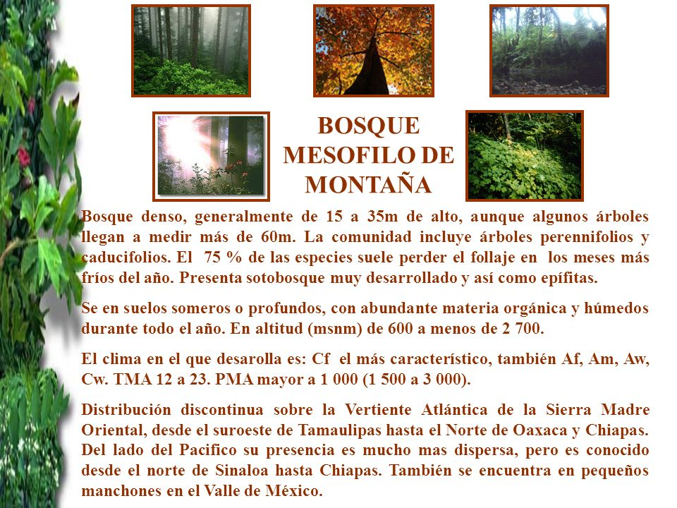 BOSQUE MESOFILO DE MONTAÑA