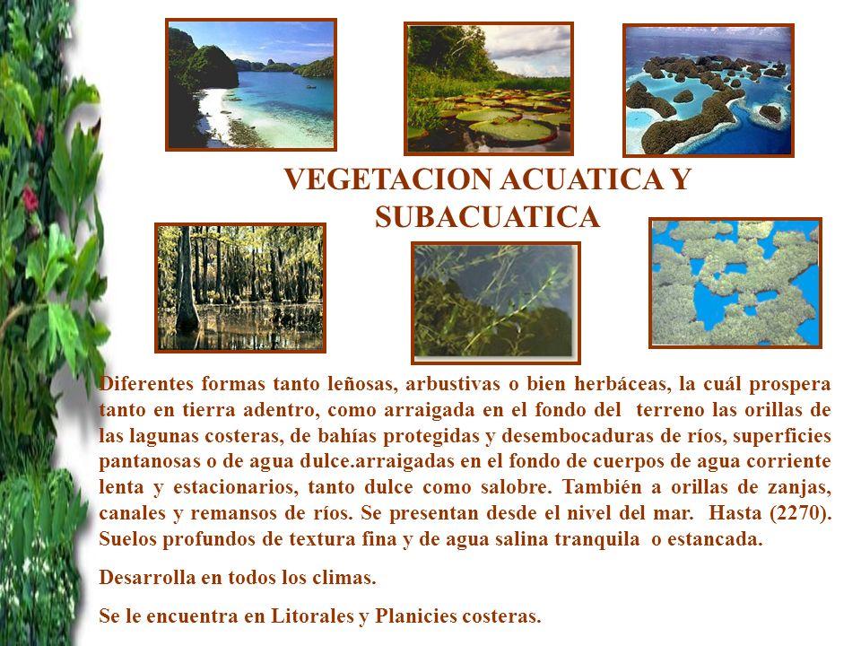 VEGETACION ACUATICA Y SUBACUATICA