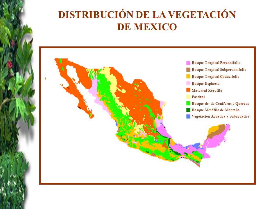 DISTRIBUCIÓN DE LA VEGETACIÓN DE MEXICO