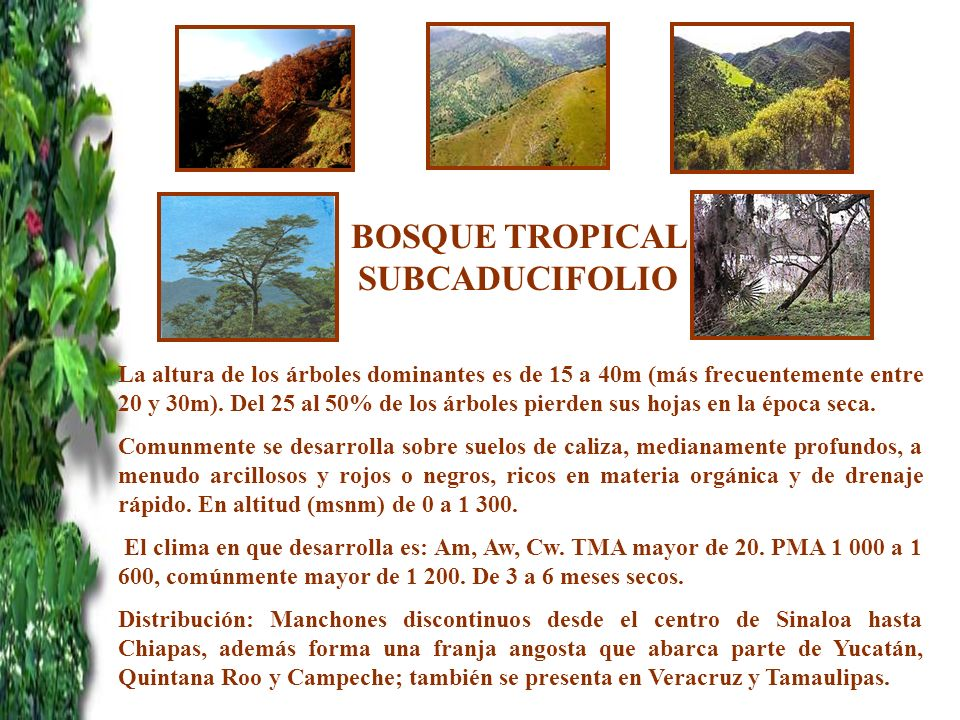 BOSQUE TROPICAL SUBCADUCIFOLIO