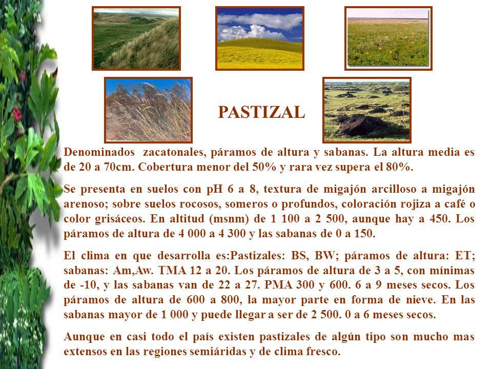 PASTIZAL Denominados zacatonales, páramos de altura y sabanas. La altura media es de 20 a 70cm. Cobertura menor del 50% y rara vez supera el 80%.