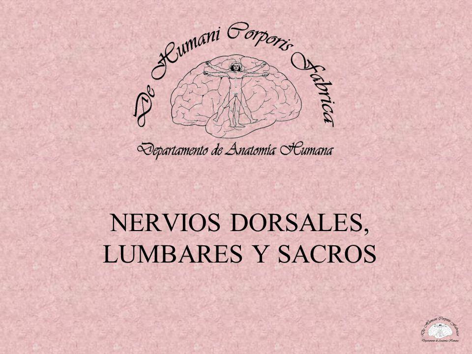 NERVIOS DORSALES, LUMBARES Y SACROS