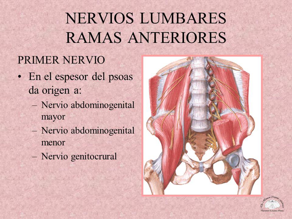 NERVIOS LUMBARES RAMAS ANTERIORES