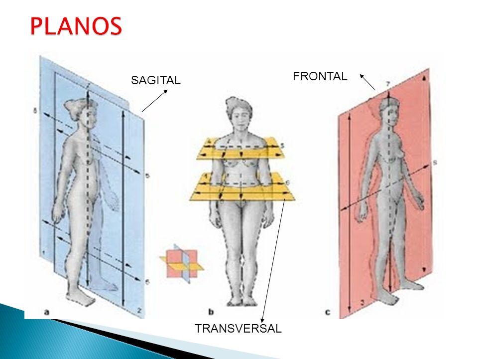PLANOS FRONTAL SAGITAL TRANSVERSAL