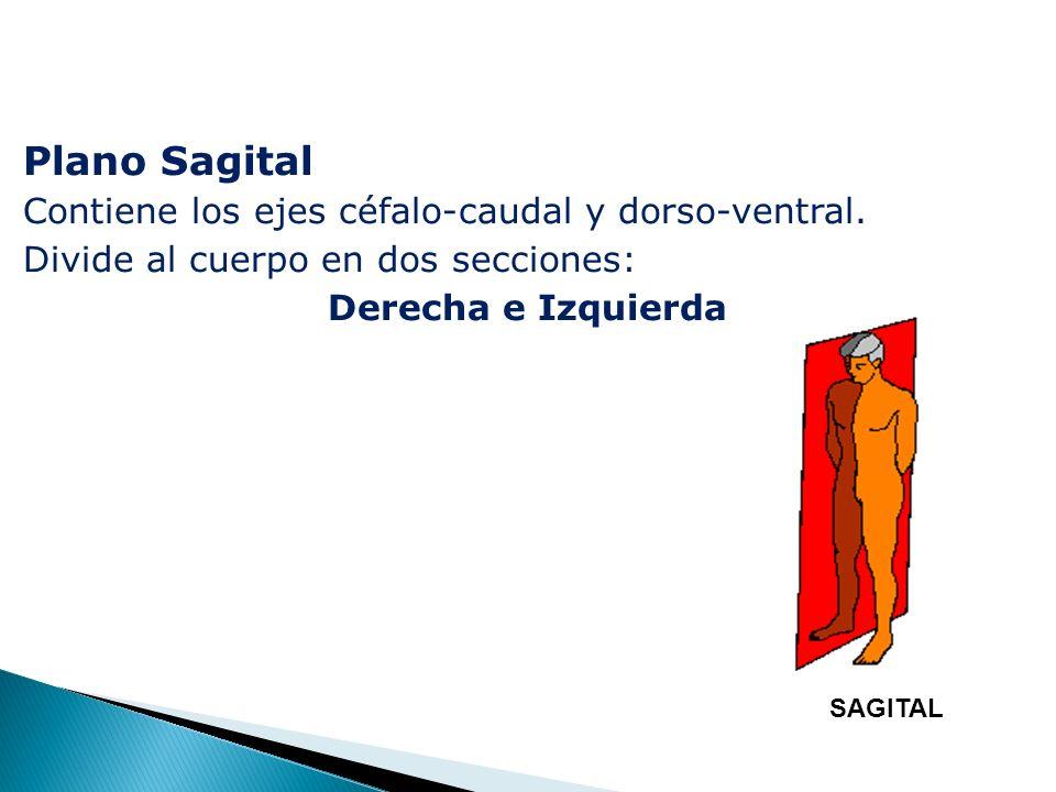Plano Sagital Contiene los ejes céfalo-caudal y dorso-ventral.