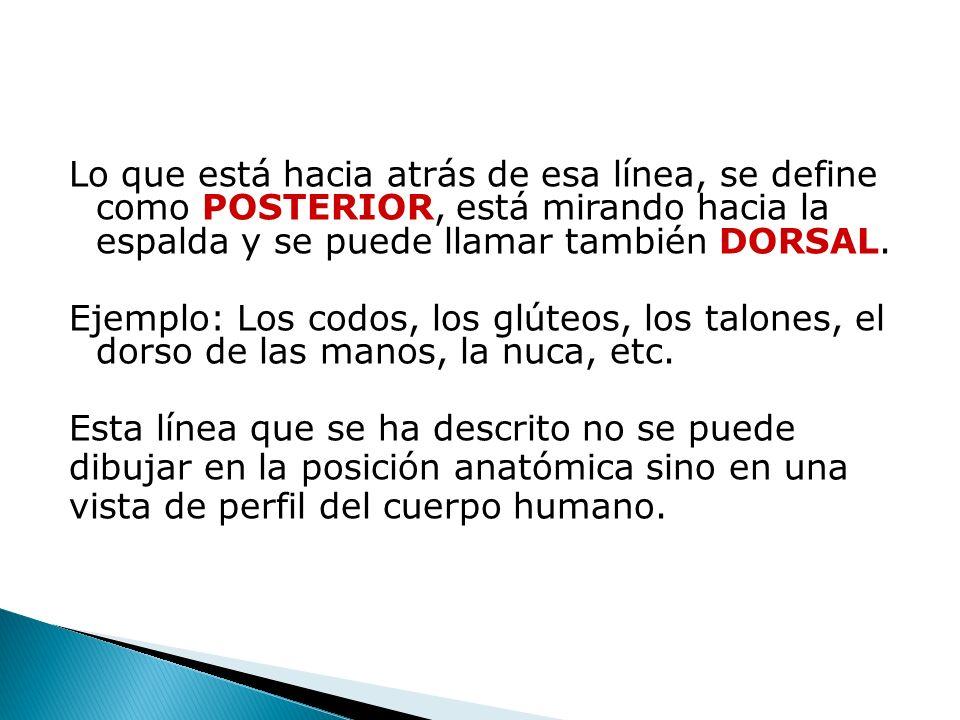 Lo que está hacia atrás de esa línea, se define como POSTERIOR, está mirando hacia la espalda y se puede llamar también DORSAL.