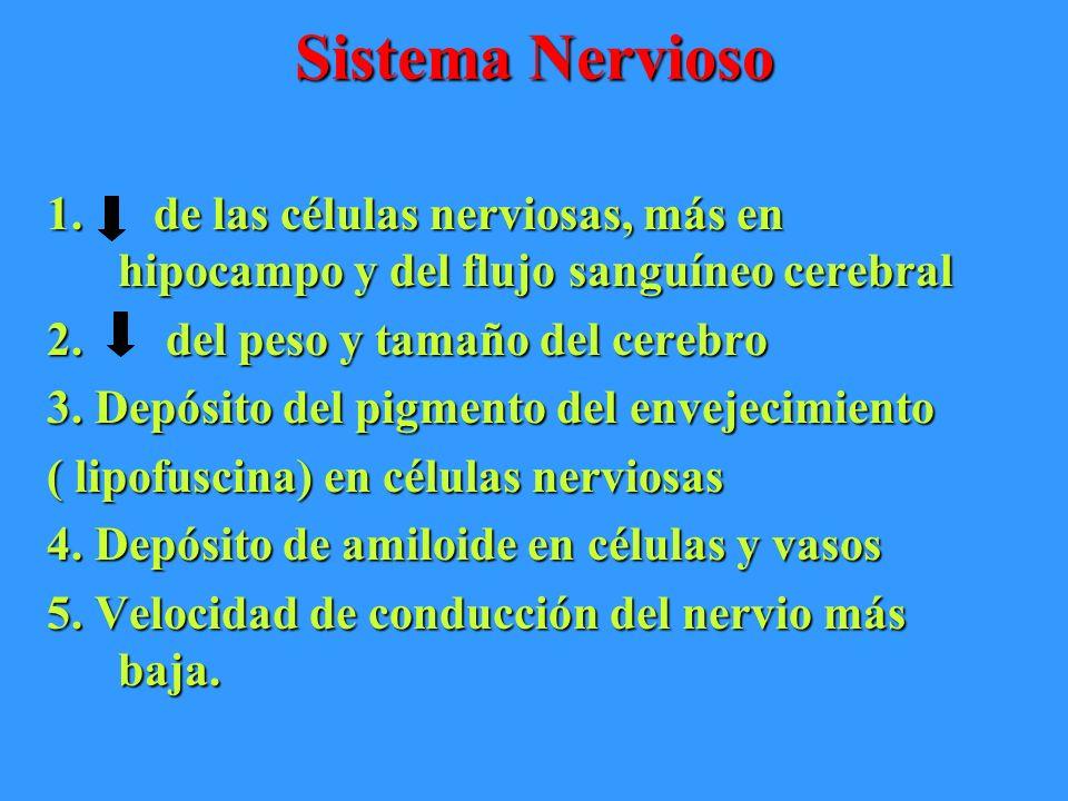 Sistema Nervioso de las células nerviosas, más en hipocampo y del flujo sanguíneo cerebral. del peso y tamaño del cerebro.