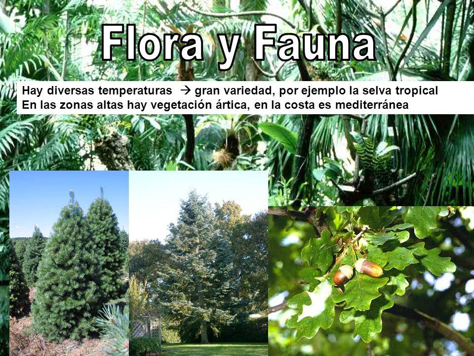 Flora y Fauna Hay diversas temperaturas  gran variedad, por ejemplo la selva tropical.