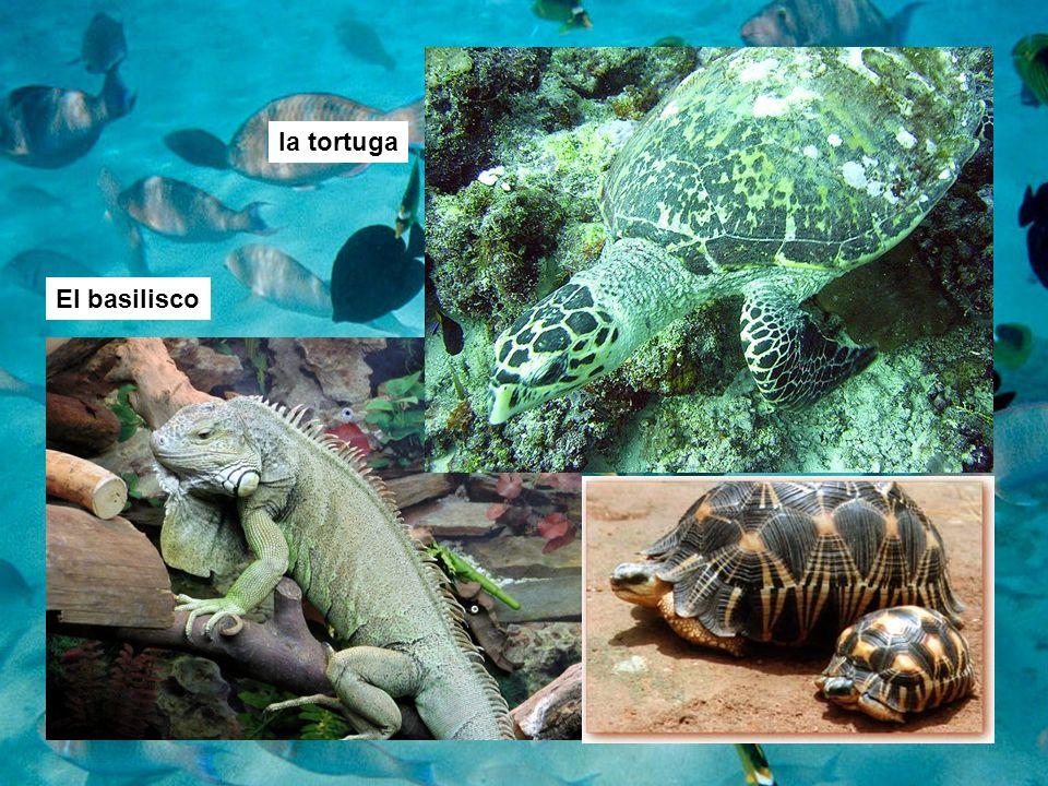 la tortuga El basilisco