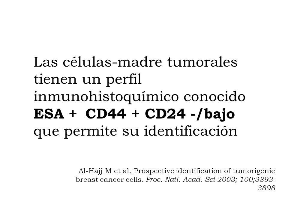 Las células-madre tumorales tienen un perfil inmunohistoquímico conocido ESA + CD44 + CD24 -/bajo que permite su identificación