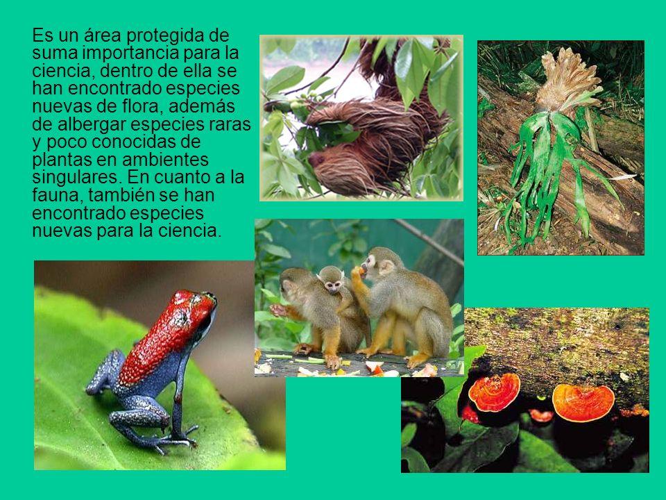 Es un área protegida de suma importancia para la ciencia, dentro de ella se han encontrado especies nuevas de flora, además de albergar especies raras y poco conocidas de plantas en ambientes singulares.