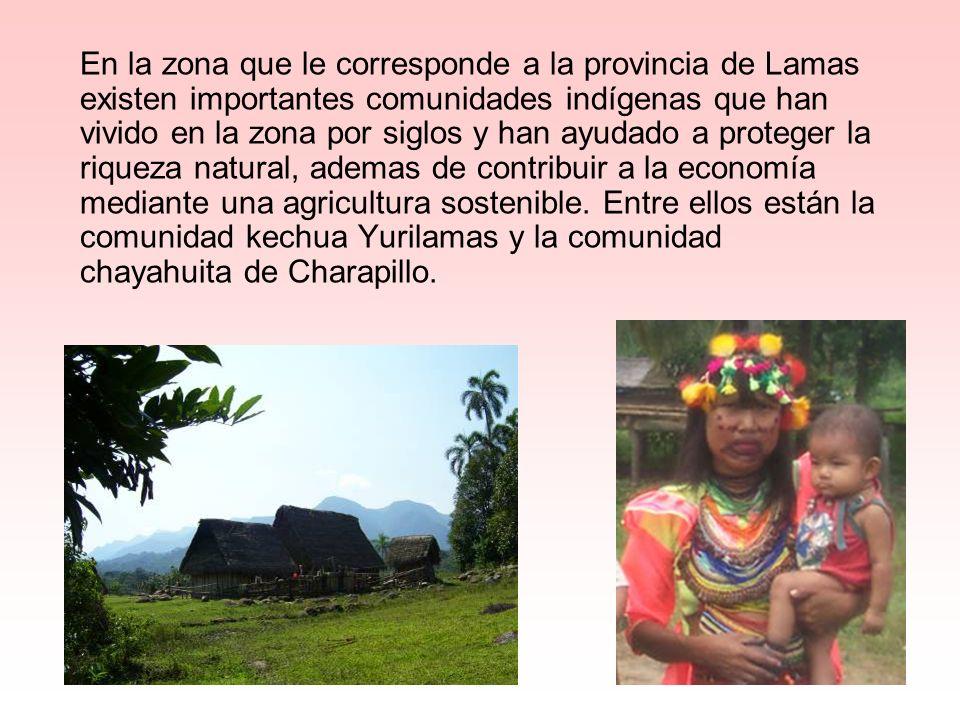 En la zona que le corresponde a la provincia de Lamas existen importantes comunidades indígenas que han vivido en la zona por siglos y han ayudado a proteger la riqueza natural, ademas de contribuir a la economía mediante una agricultura sostenible.