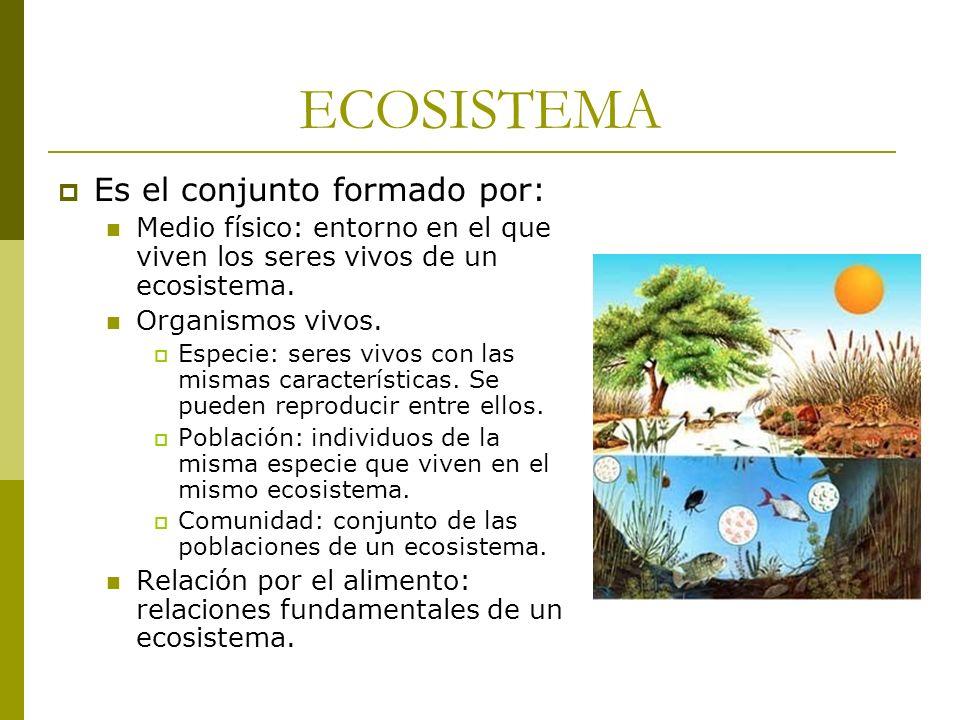 ECOSISTEMA Es el conjunto formado por: