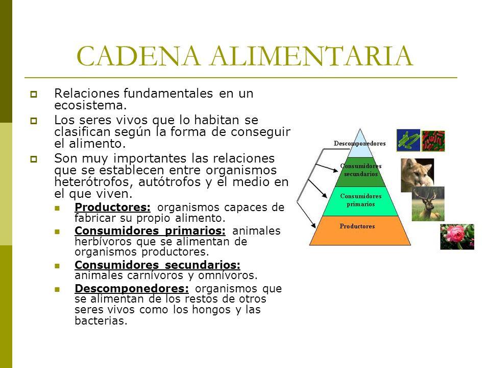 CADENA ALIMENTARIA Relaciones fundamentales en un ecosistema.