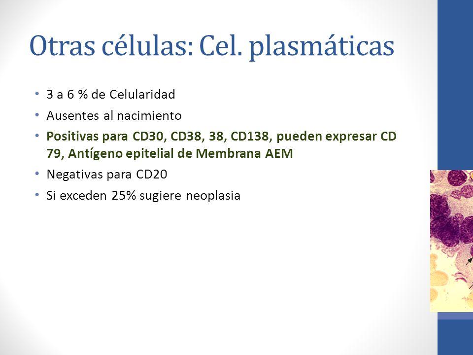 Otras células: Cel. plasmáticas