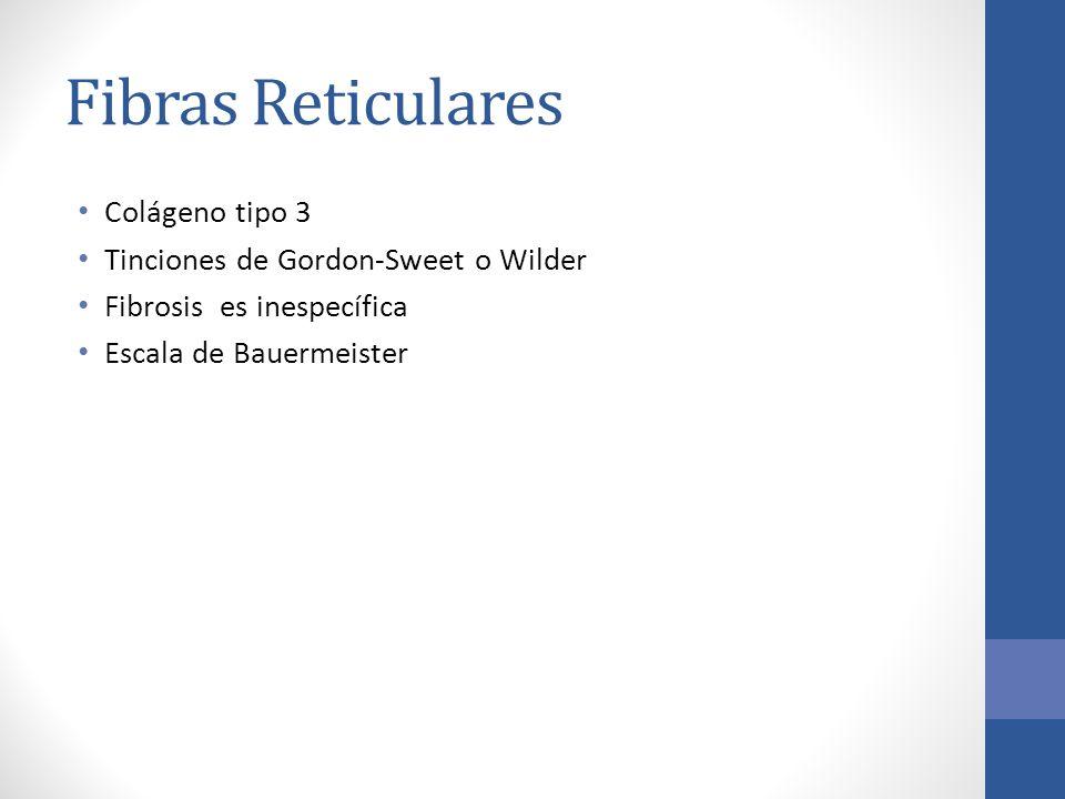 Fibras Reticulares Colágeno tipo 3 Tinciones de Gordon-Sweet o Wilder