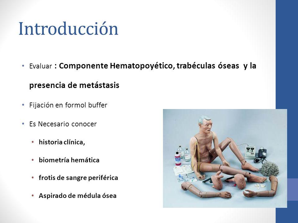 Introducción Evaluar : Componente Hematopoyético, trabéculas óseas y la presencia de metástasis. Fijación en formol buffer.