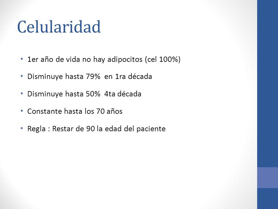 Celularidad 1er año de vida no hay adipocitos (cel 100%)