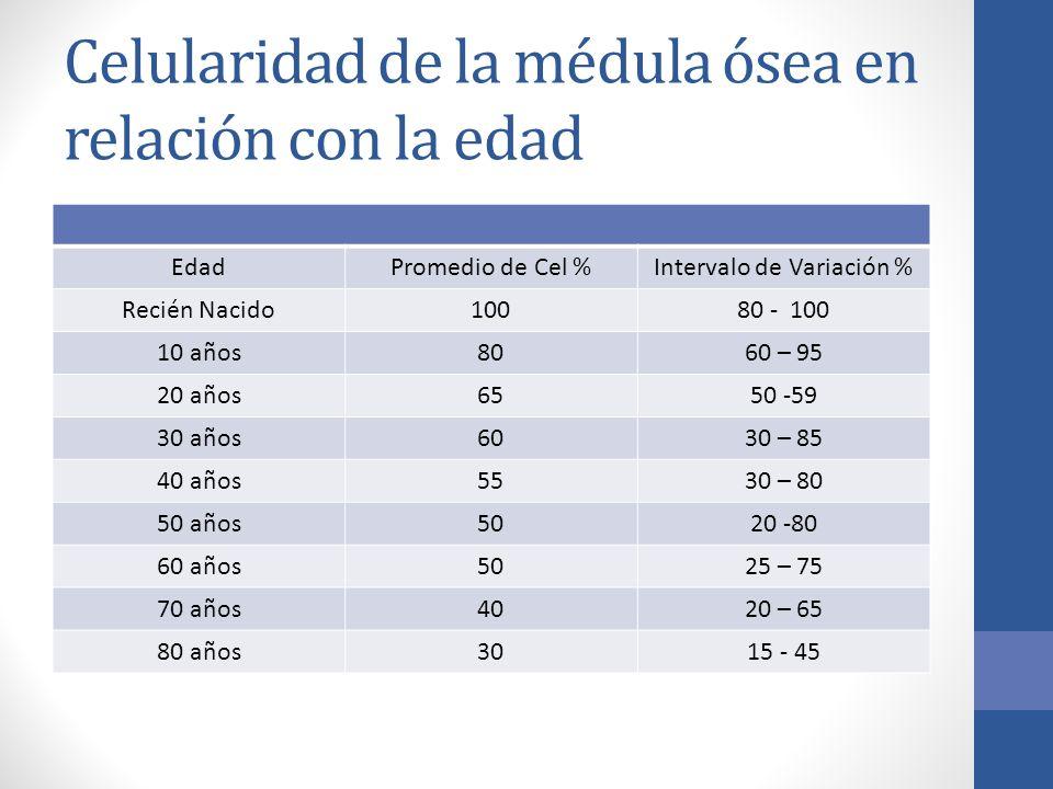 Celularidad de la médula ósea en relación con la edad
