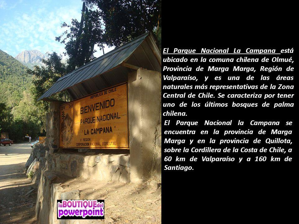 El Parque Nacional La Campana está ubicado en la comuna chilena de Olmué, Provincia de Marga Marga, Región de Valparaíso, y es una de las áreas naturales más representativas de la Zona Central de Chile. Se caracteriza por tener uno de los últimos bosques de palma chilena.