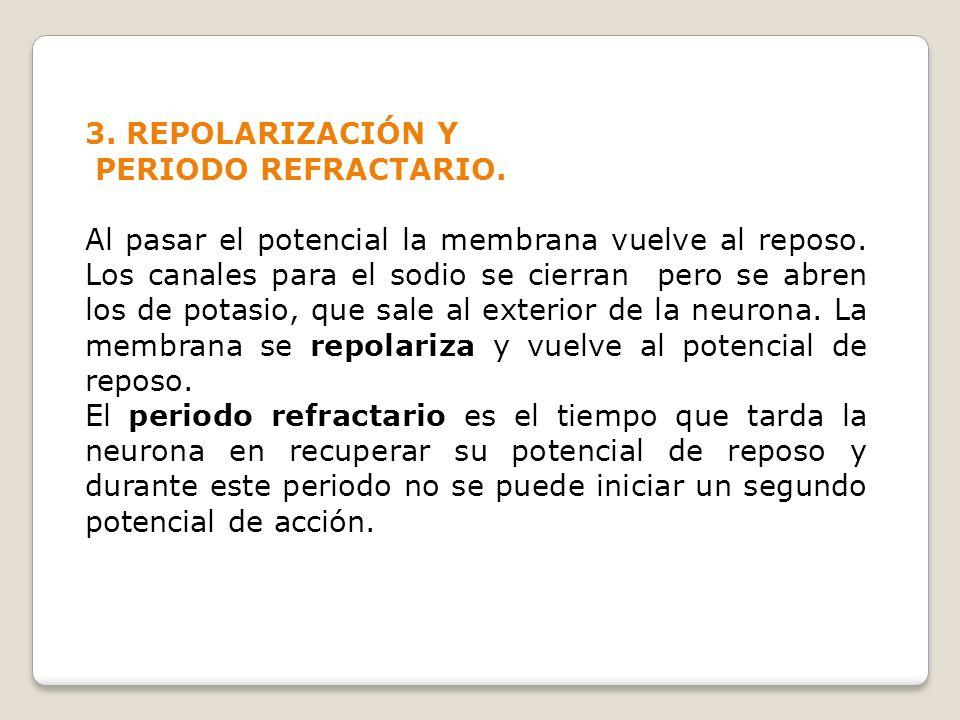 3. REPOLARIZACIÓN Y PERIODO REFRACTARIO.