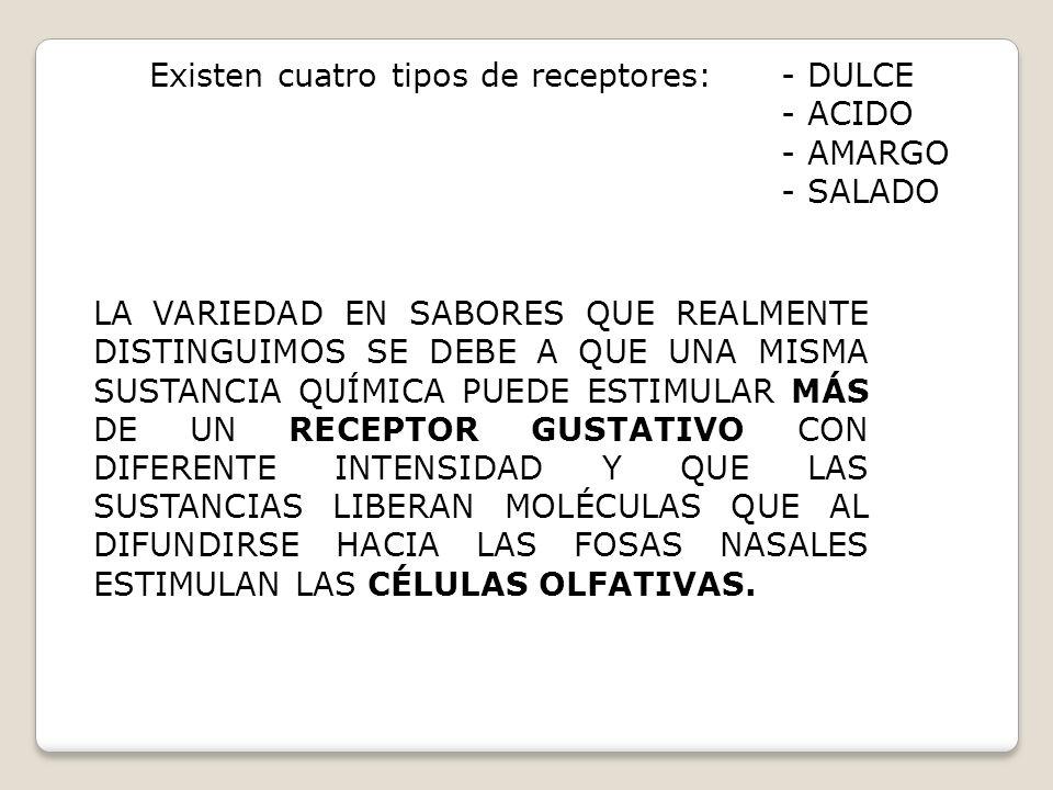 Existen cuatro tipos de receptores: - DULCE - ACIDO - AMARGO - SALADO