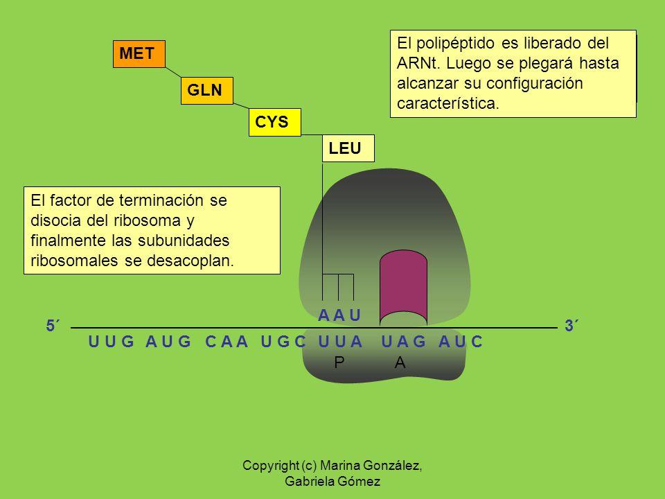 Copyright (c) Marina González, Gabriela Gómez