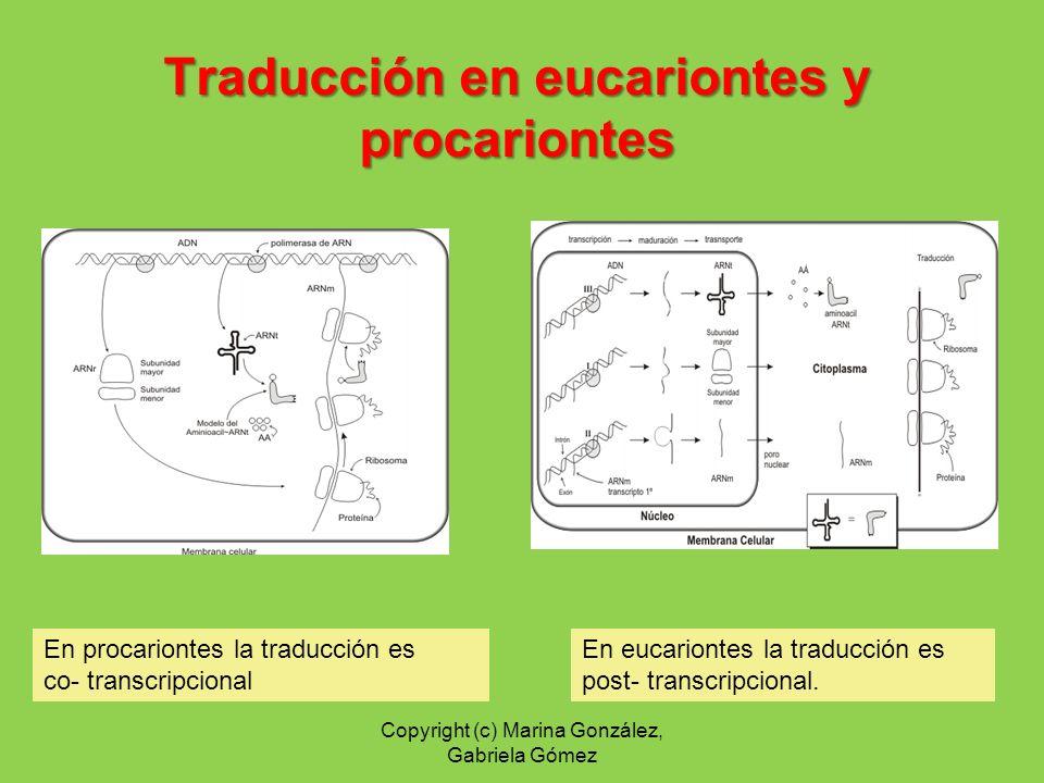 Traducción en eucariontes y procariontes
