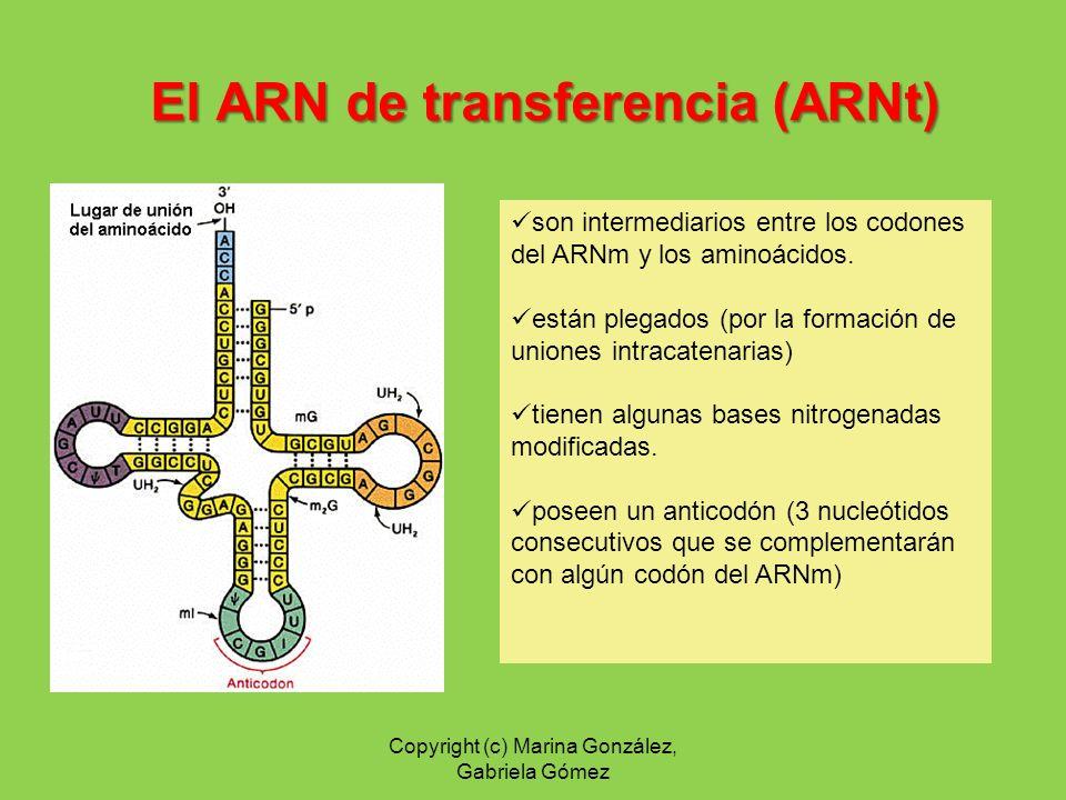 El ARN de transferencia (ARNt)