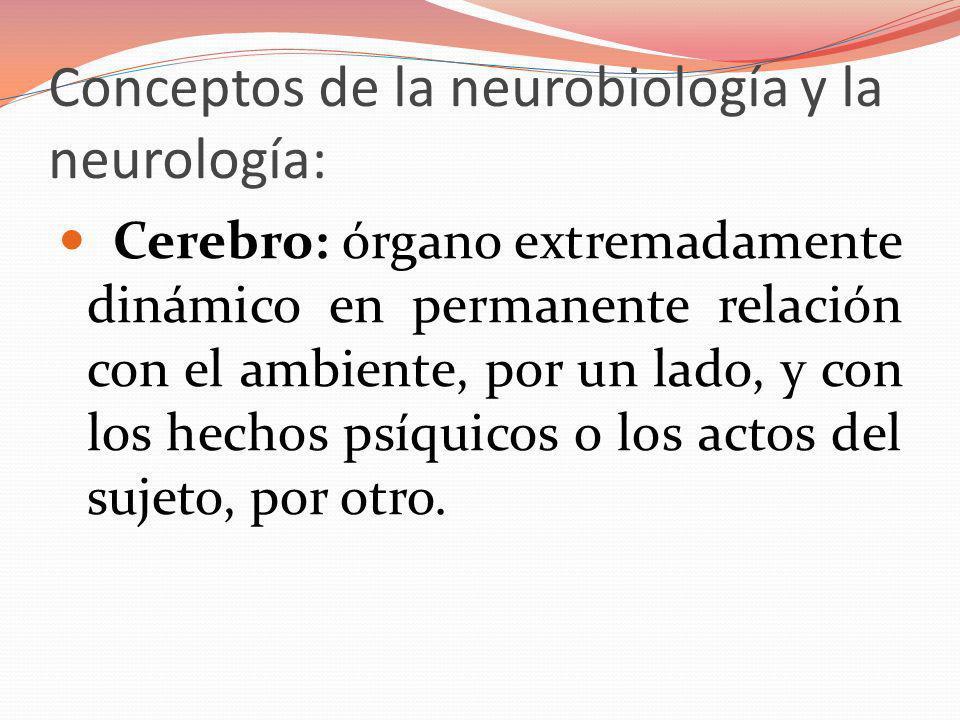 Conceptos de la neurobiología y la neurología: