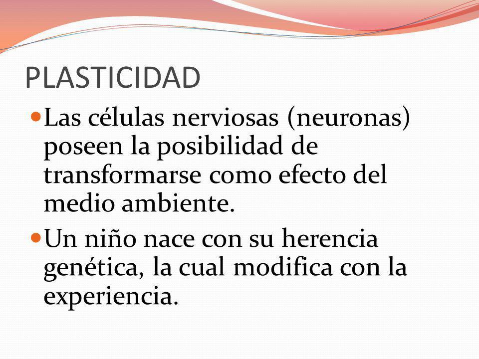 PLASTICIDAD Las células nerviosas (neuronas) poseen la posibilidad de transformarse como efecto del medio ambiente.