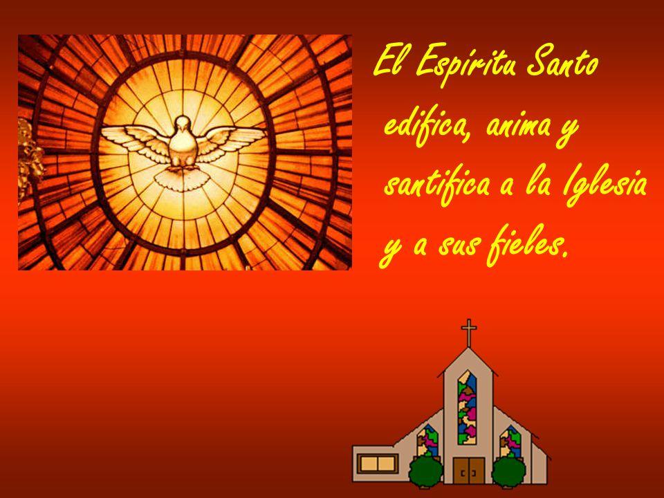 El Espíritu Santo edifica, anima y santifica a la Iglesia y a sus fieles.