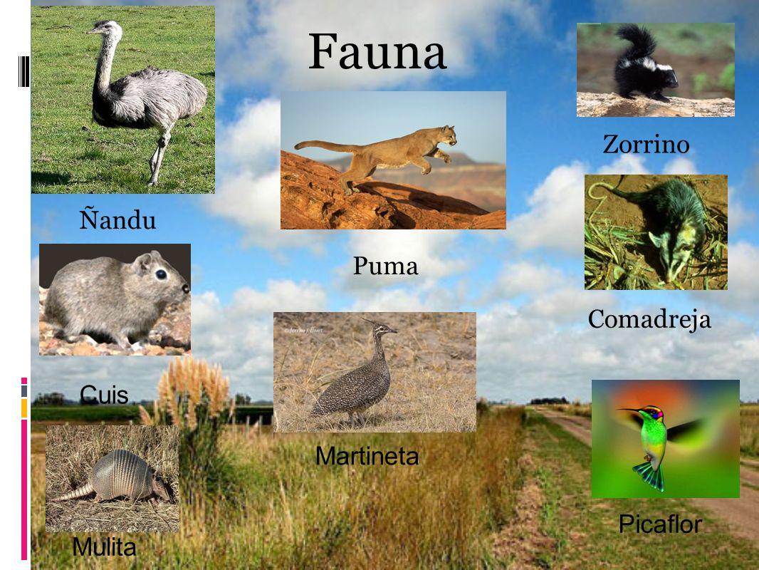 Fauna Zorrino Ñandu Puma Comadreja Cuis Martineta Picaflor Mulita