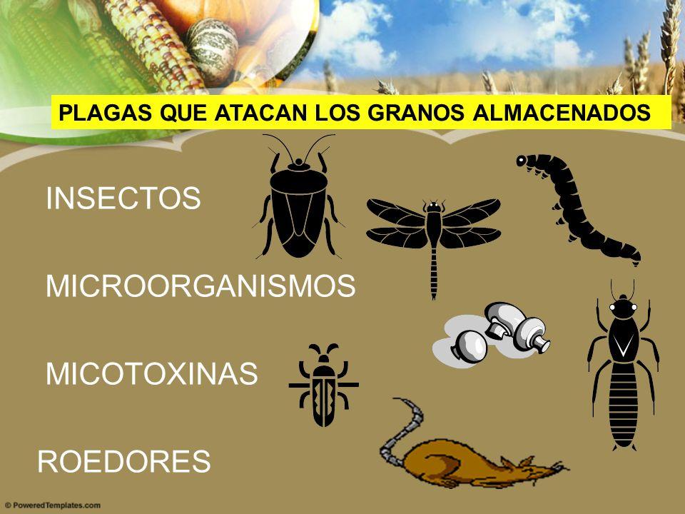 INSECTOS MICROORGANISMOS MICOTOXINAS ROEDORES