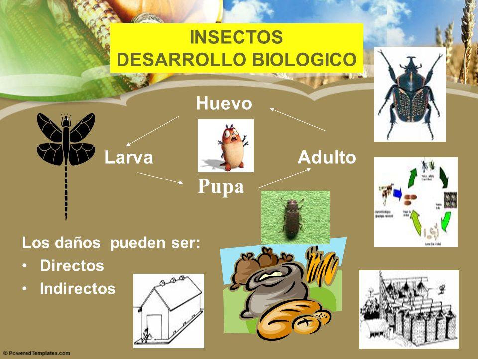 Pupa INSECTOS DESARROLLO BIOLOGICO Huevo Larva Adulto