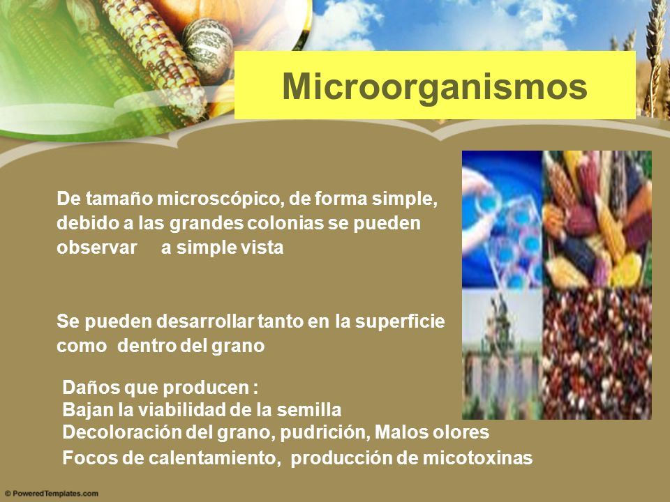 Microorganismos De tamaño microscópico, de forma simple,