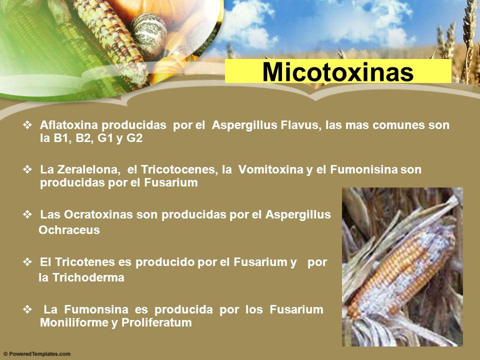 Micotoxinas Aflatoxina producidas por el Aspergillus Flavus, las mas comunes son la B1, B2, G1 y G2.