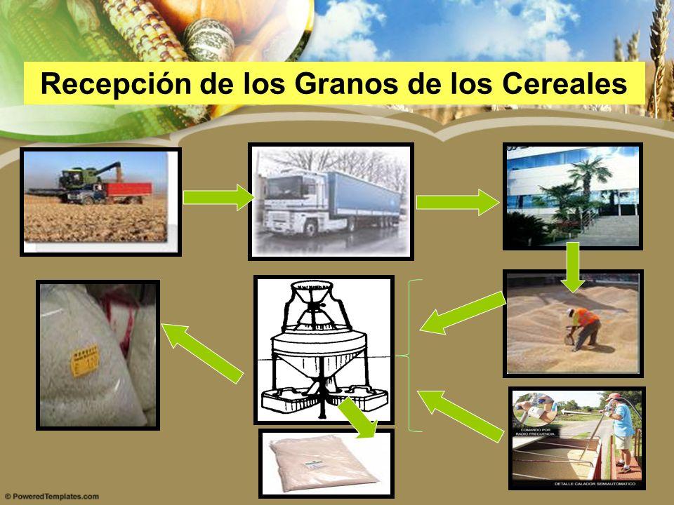 Recepción de los Granos de los Cereales