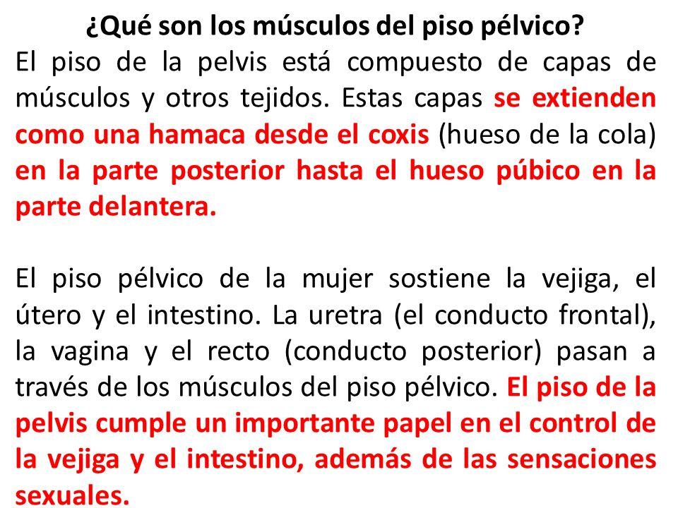 ¿Qué son los músculos del piso pélvico