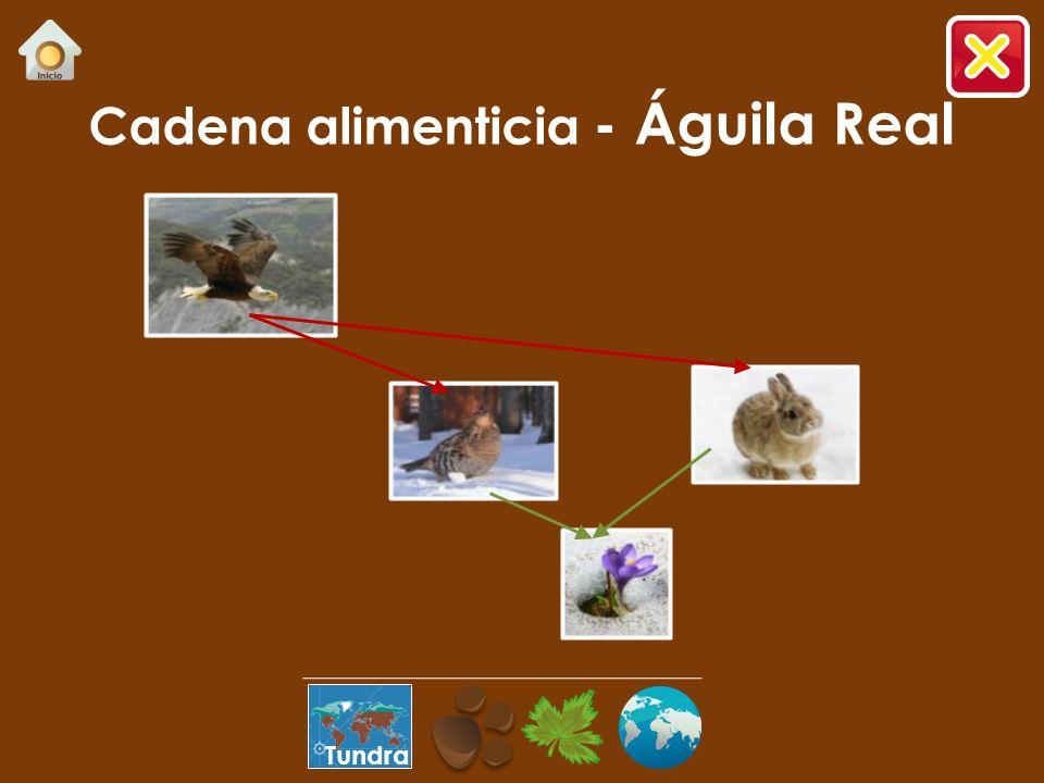 Cadena alimenticia - Águila Real