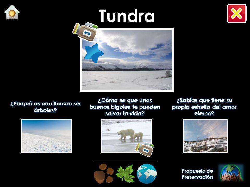 Tundra ¿Porqué es una llanura sin árboles